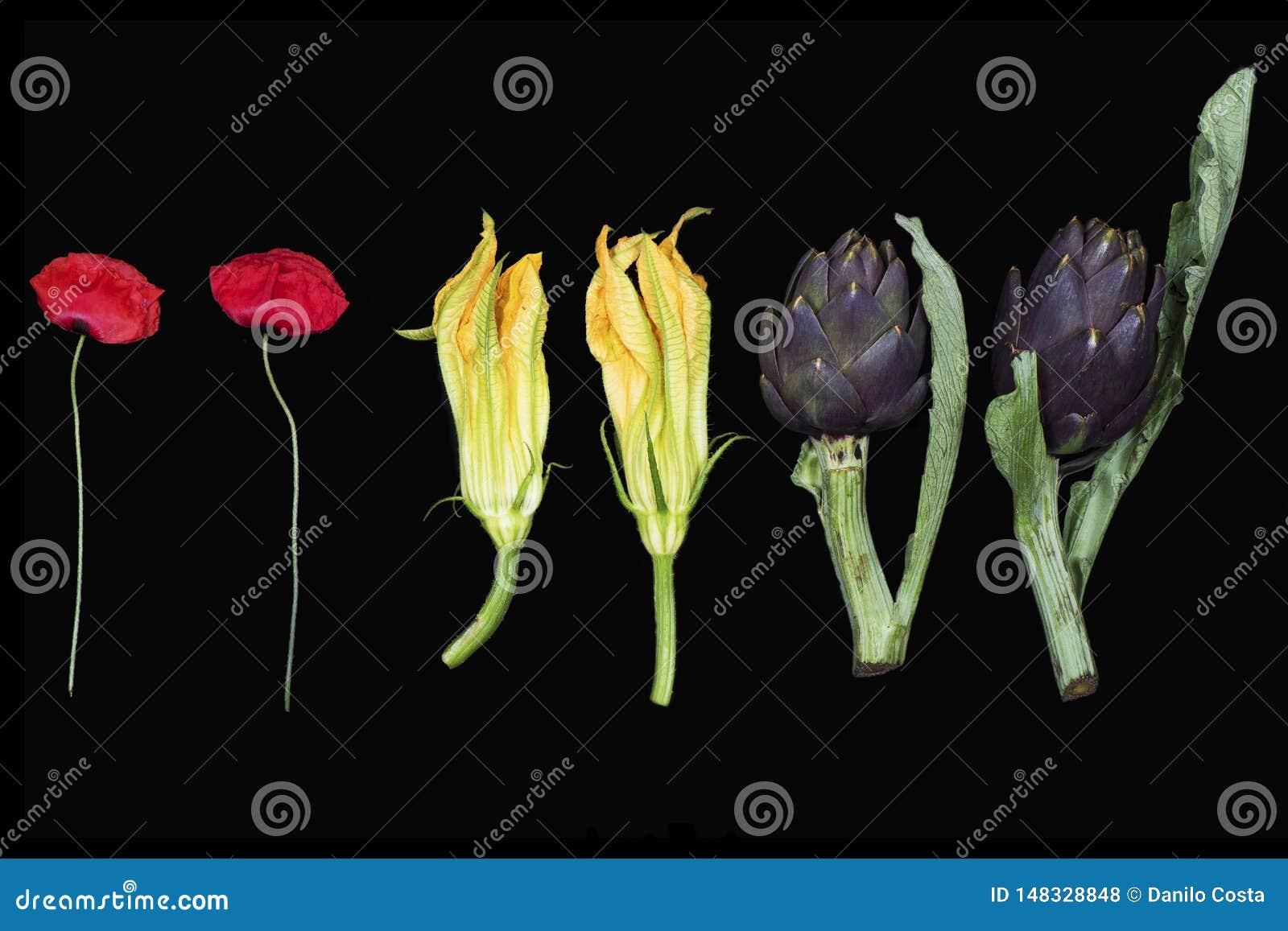 Kwiaty, maczki, dyniowi kwiaty, karczochy