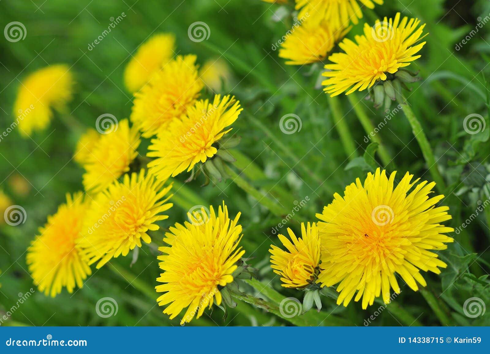 Kwiaty mogą