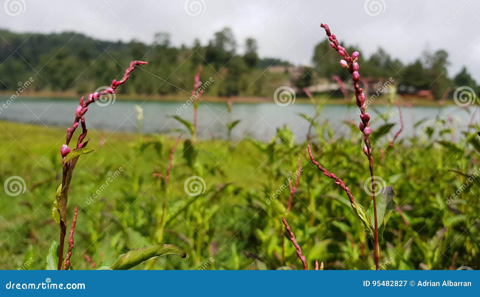 Kwiaty na jeziorze 2