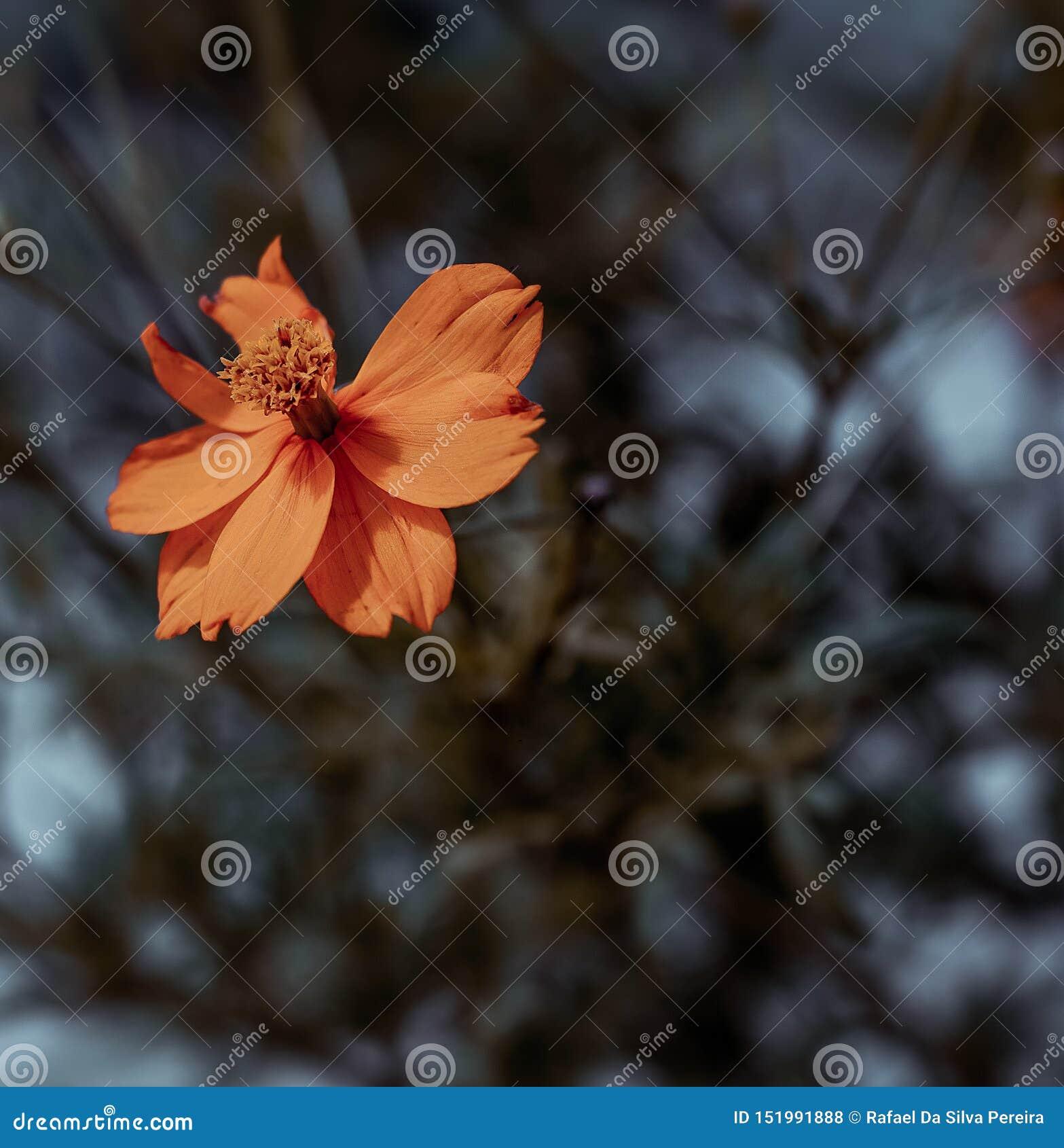 Kwiaty pomara?czy