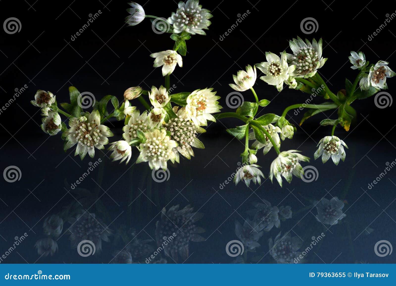 Kwiaty przyrody fantastyczny piękno
