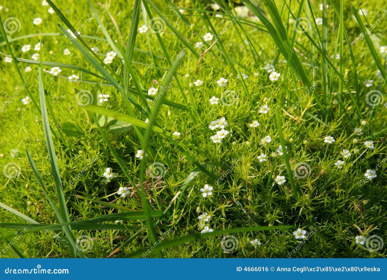 Kwiaty trawy dywan