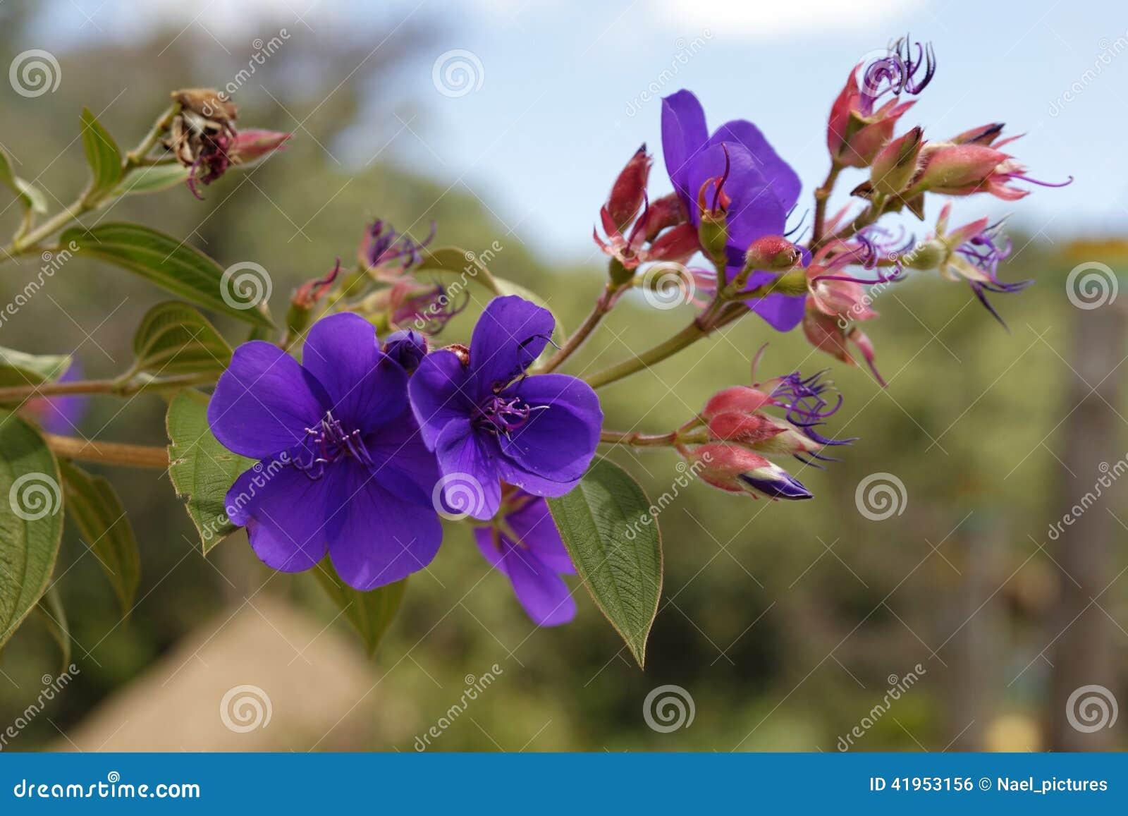 Kwiaty tropikalnego