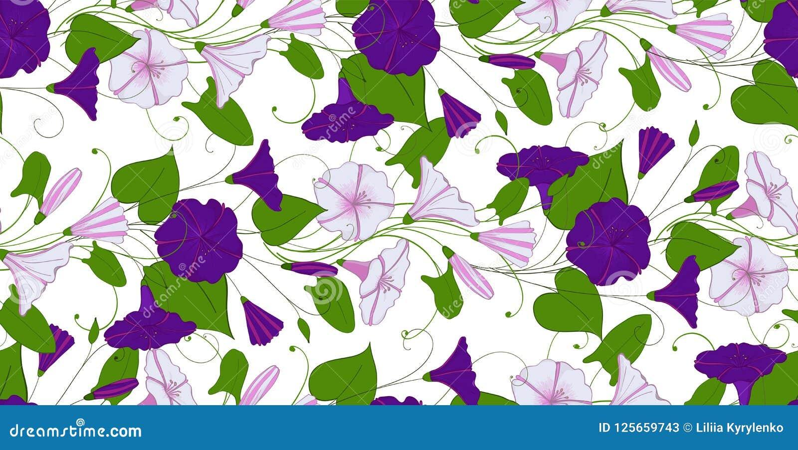 Kwiecisty elegancki tło powój bezszwowy oferta wzoru kwiatu bindweed Chwała niekończący się kobiecy ornament