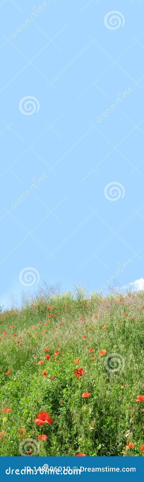 Kwiecisty sztandar z niebieskiego nieba i czerwieni maczkami na zielonej ??ce