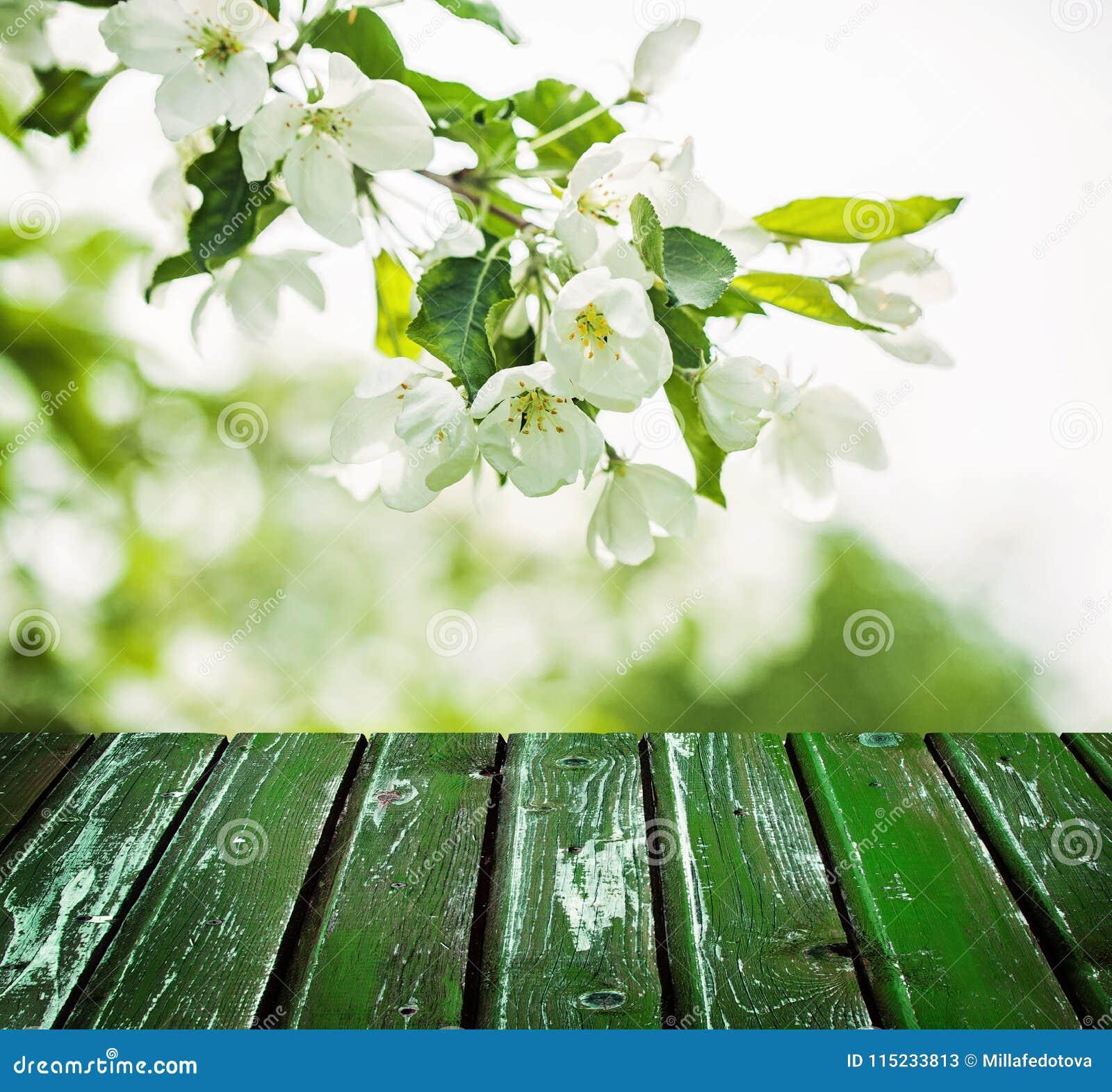 Kwiecisty wiosny tło z kwiatami, zieleń liście