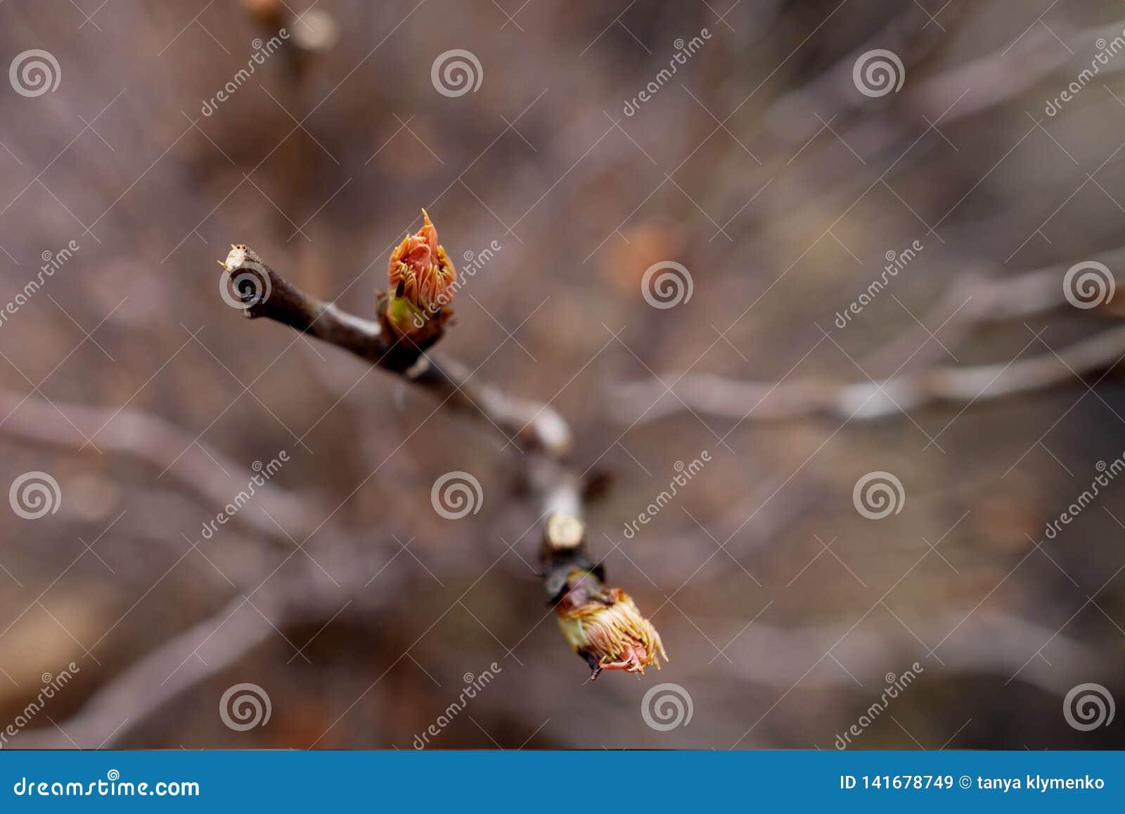 Kwitnąć liście na drzewie
