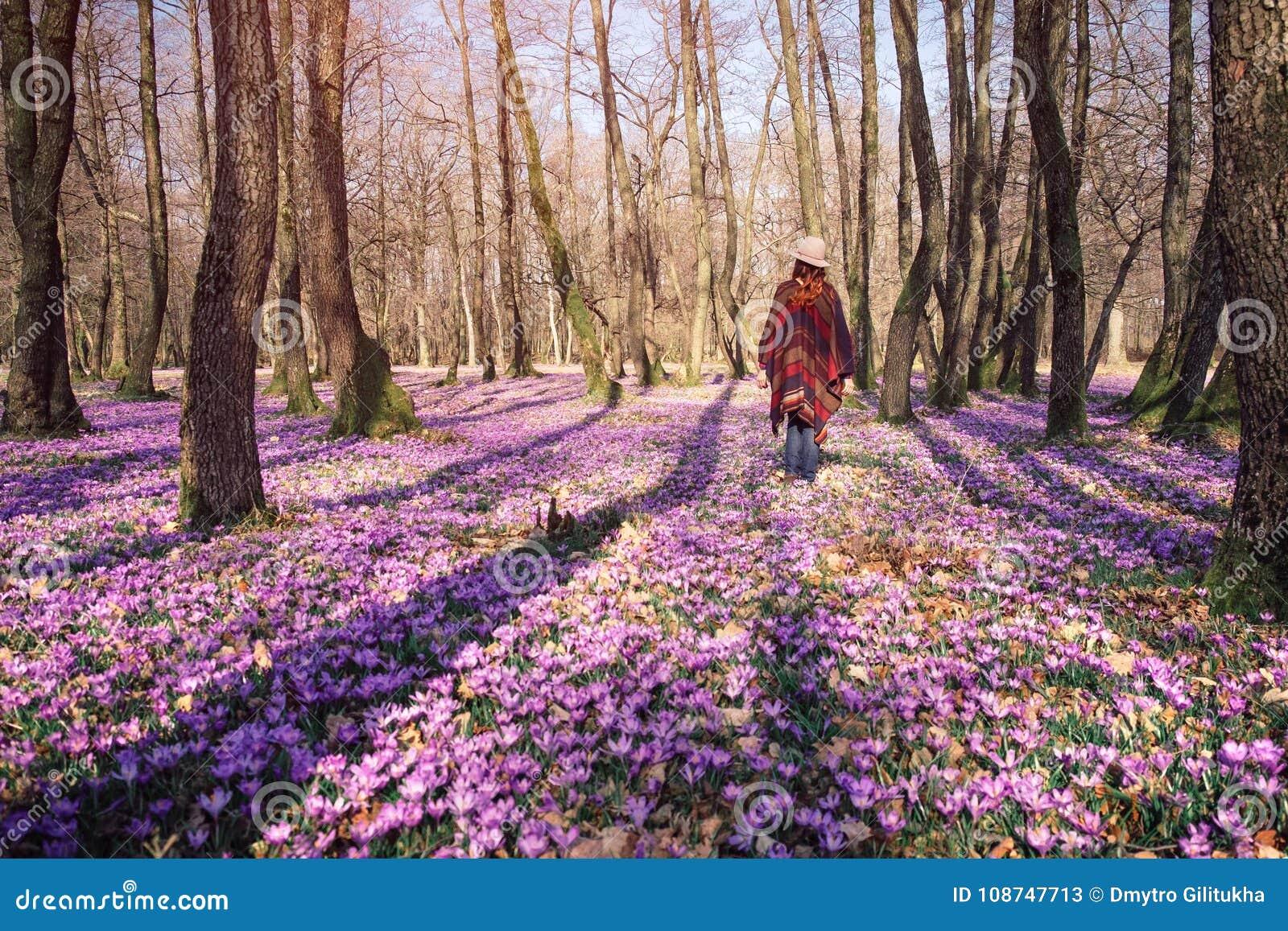 Kwitnąca natura, krokusy, młody podróżnik