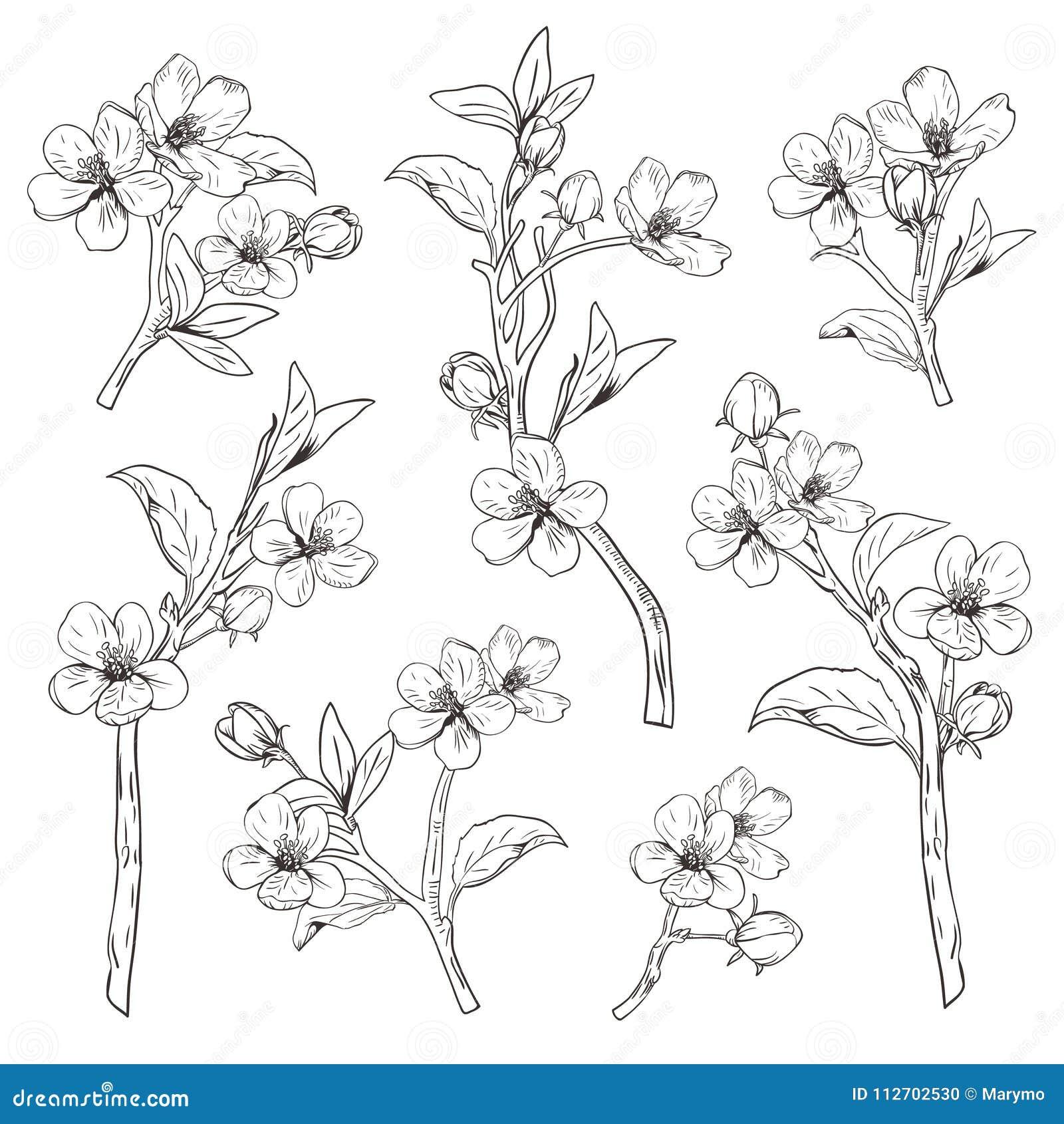 Kwitnący drzewo Ustawia kolekcję Ręka rysujący botaniczny okwitnięcie rozgałęzia się na białym tle również zwrócić corel ilustrac