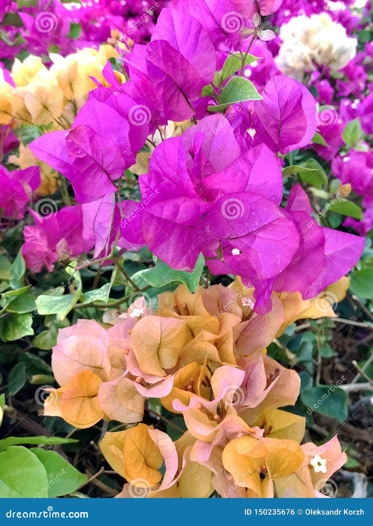 Kwitnący piękny kwiat z zielonymi liśćmi, żyje naturalną naturę
