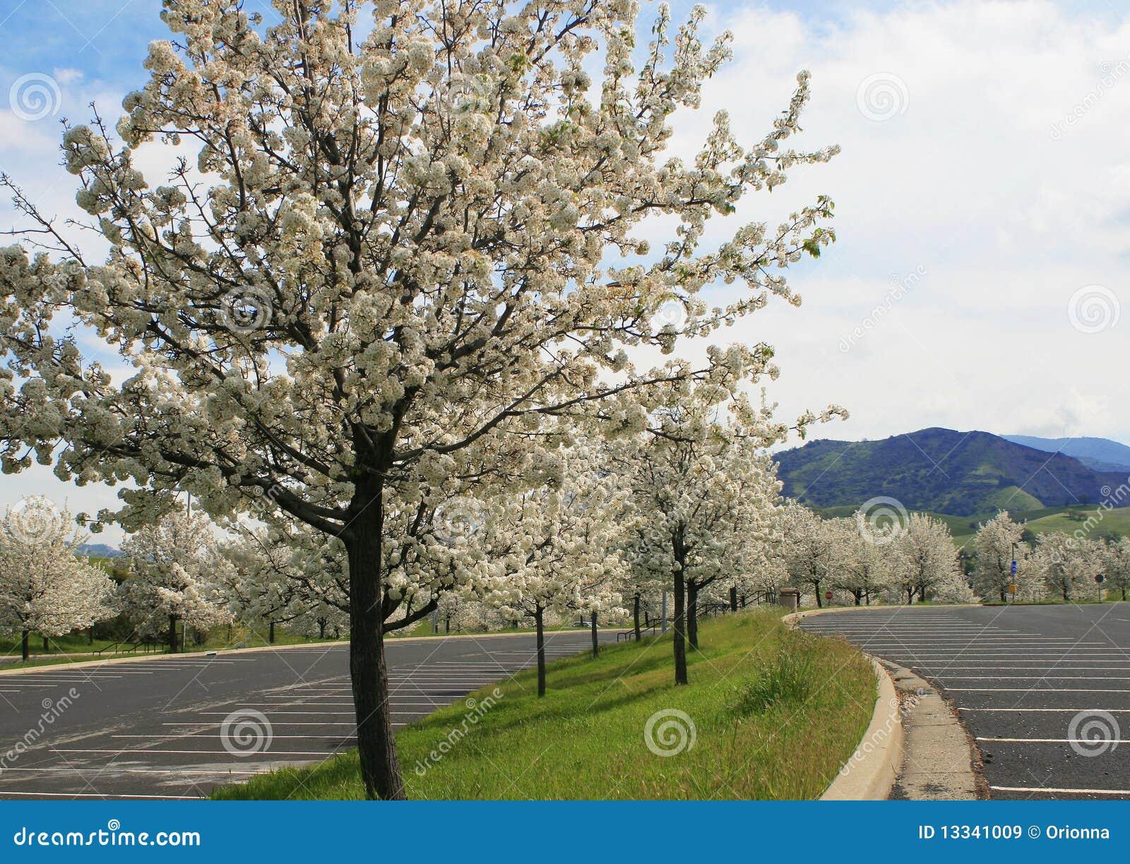 Kwitnący rzędu wiosna drzewa