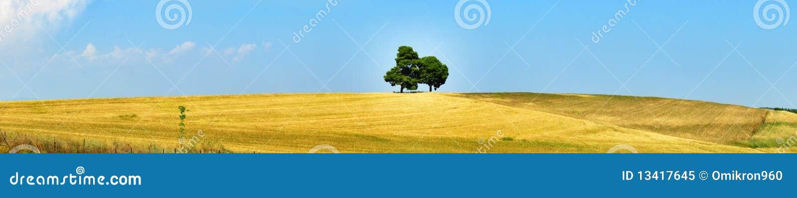 Kwitnie łąkę
