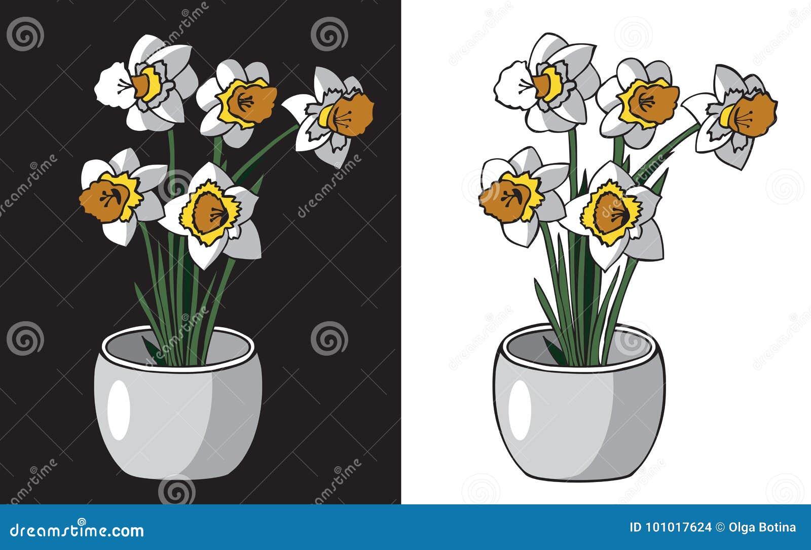 Kwitnie daffodils w garnku
