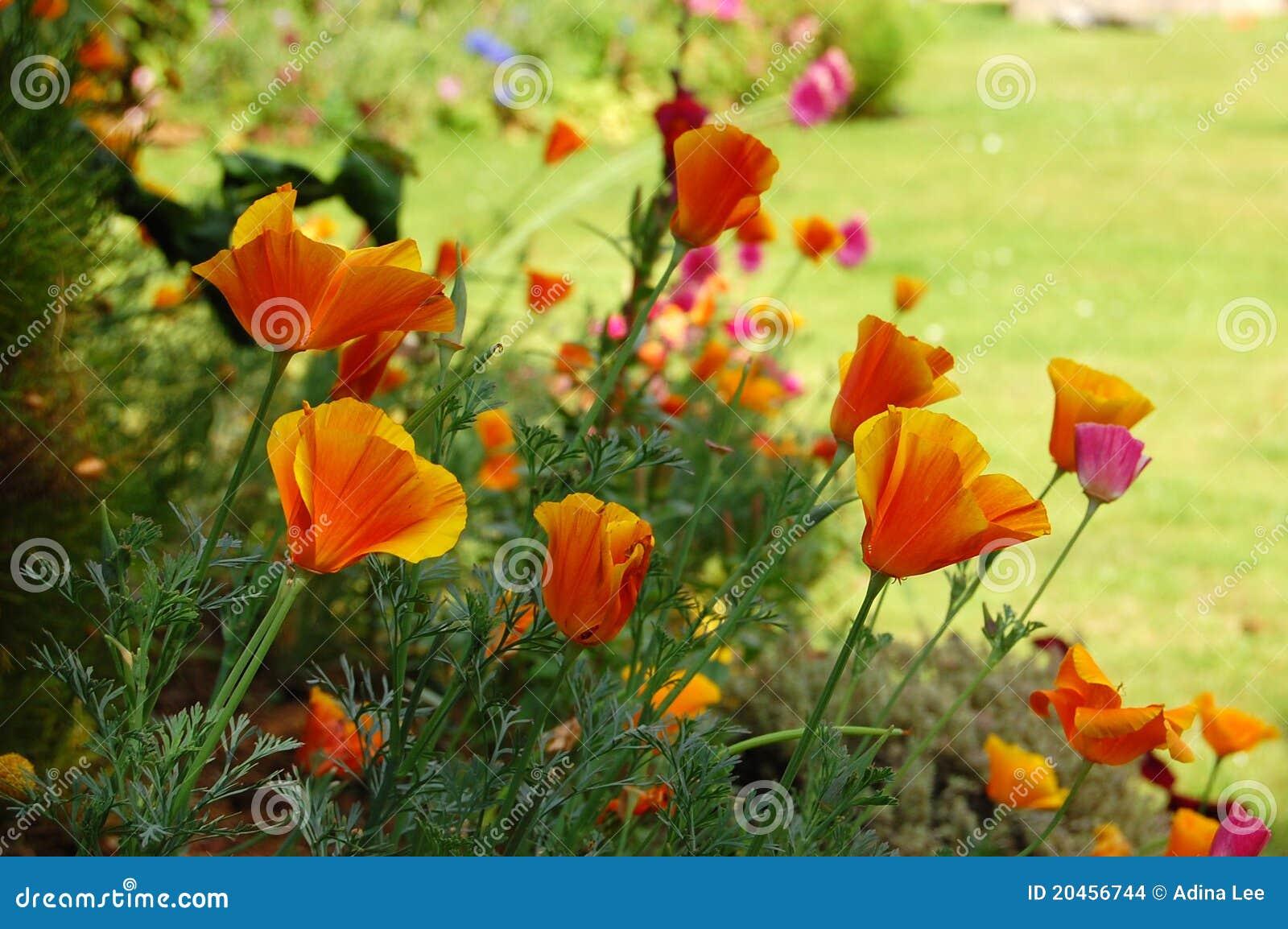 Kwitnie lato