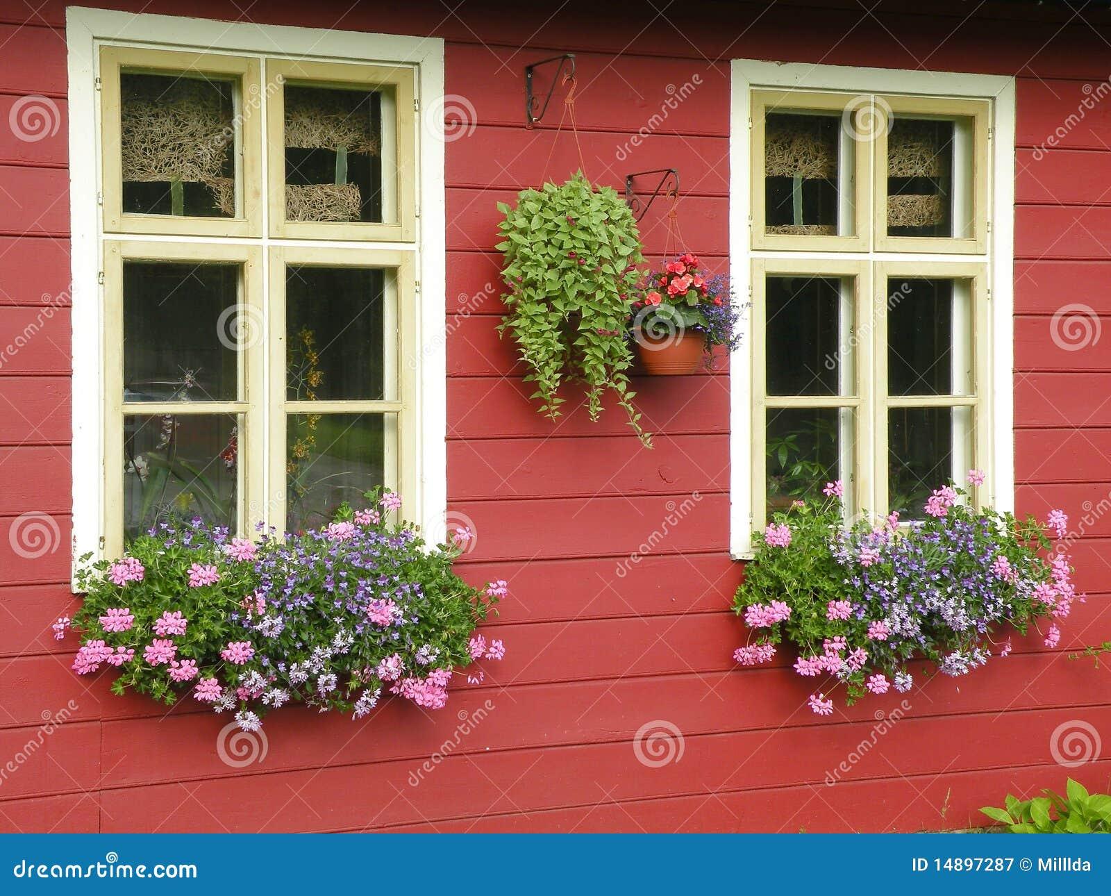 Kwitnie okno