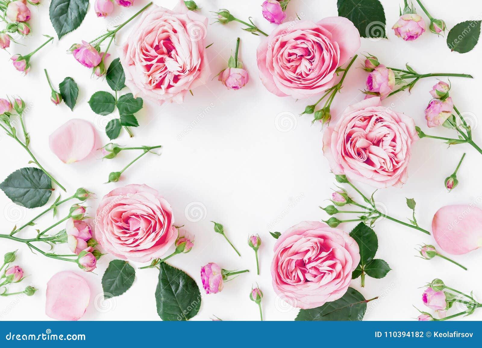 Kwitnie ramę z różowymi różami, pączkami i liśćmi na białym tle, Mieszkanie nieatutowy, odgórny widok Wiosny ramowy tło