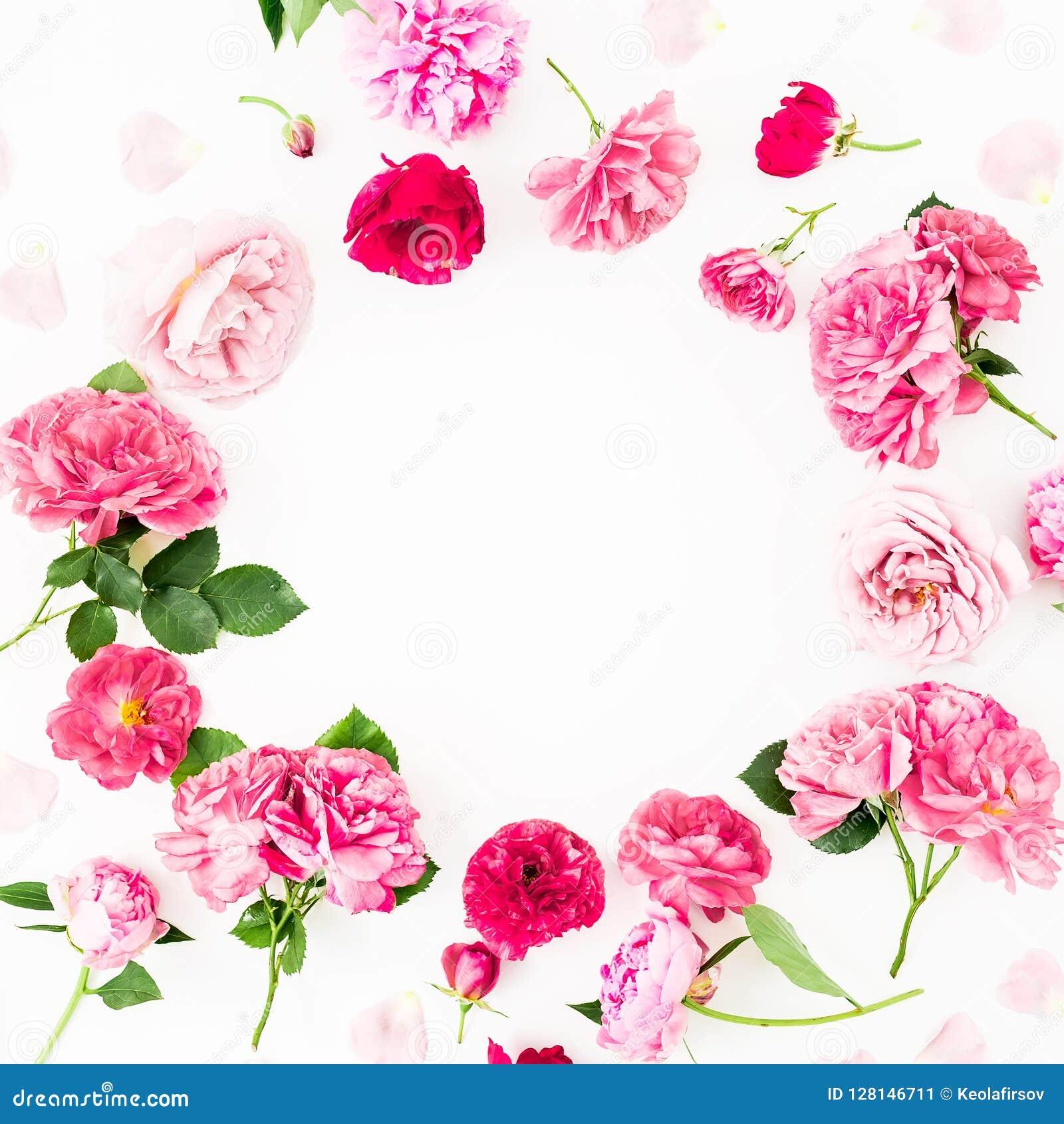 Kwitnie wokoło ramy różowe róże i anemon, peonia kwiaty na białym tle Mieszkanie nieatutowy, odgórny widok Pastel kwitnie tekstur
