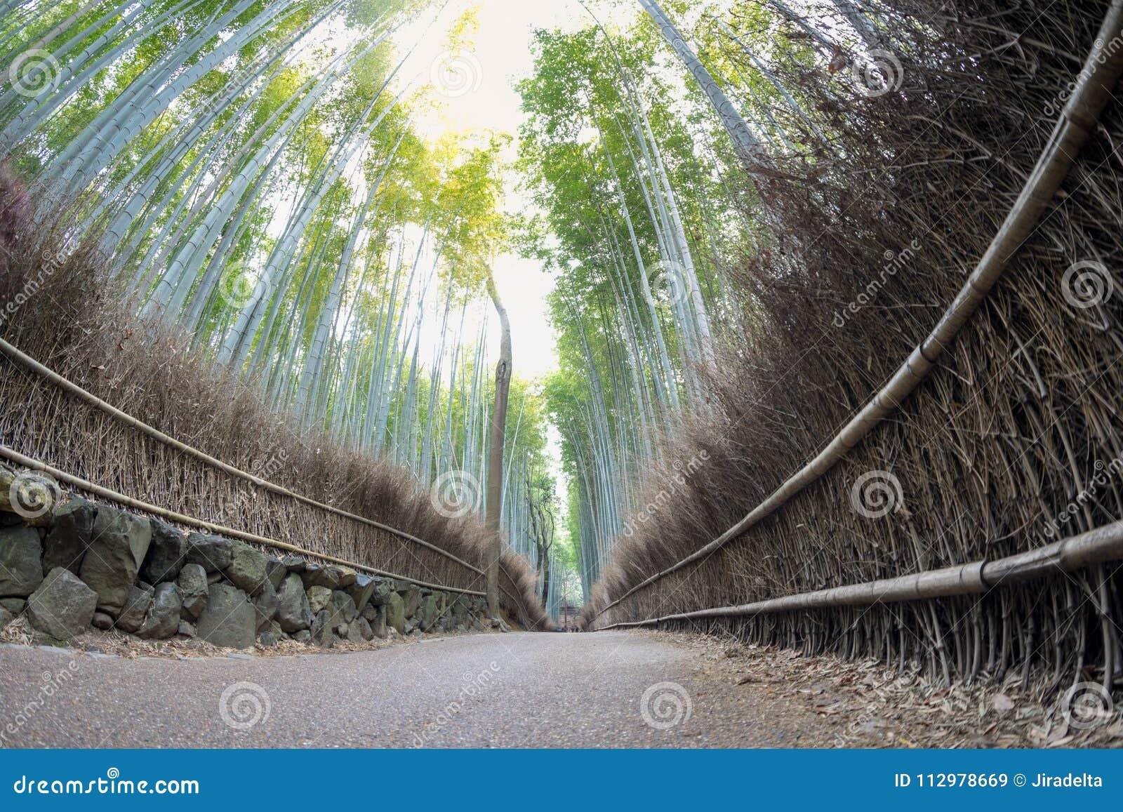 Bamboo path of Arashiyama view from Low angle