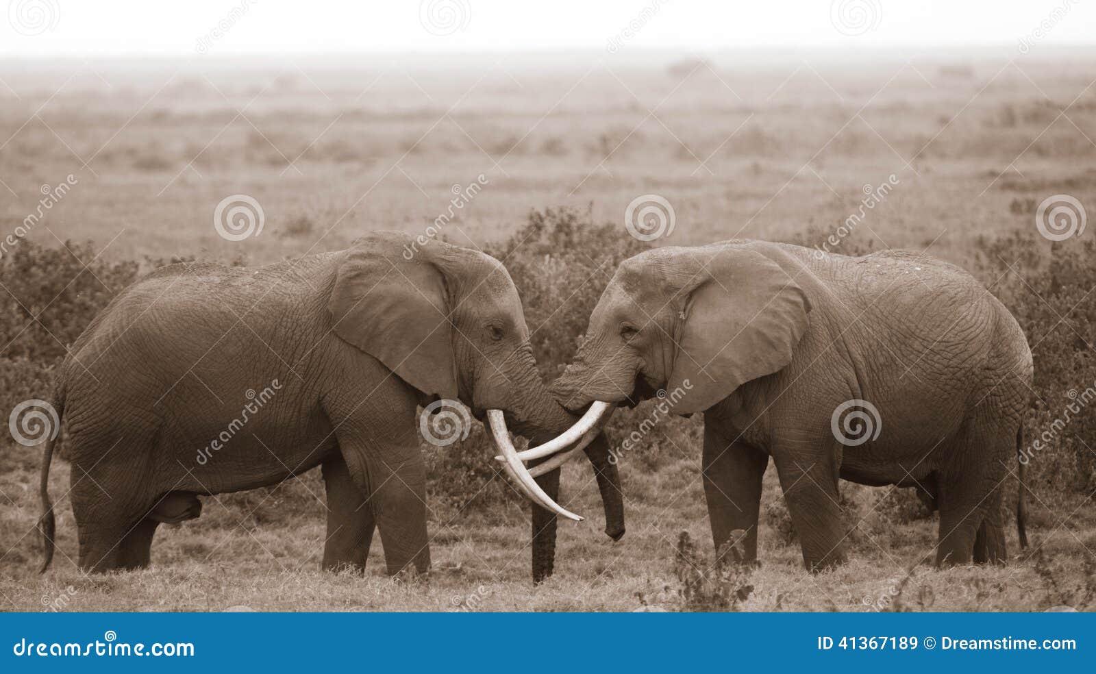 Kyssa för elefanter