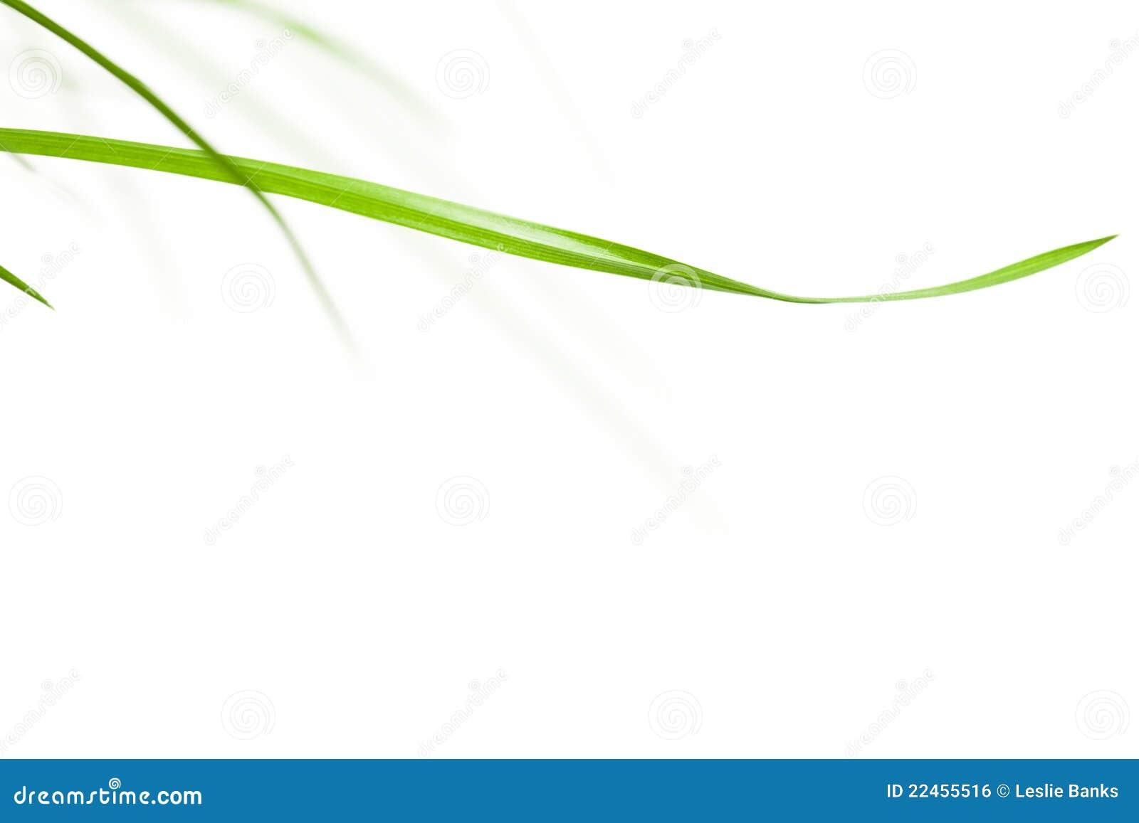 Lámina de la hierba horizontal