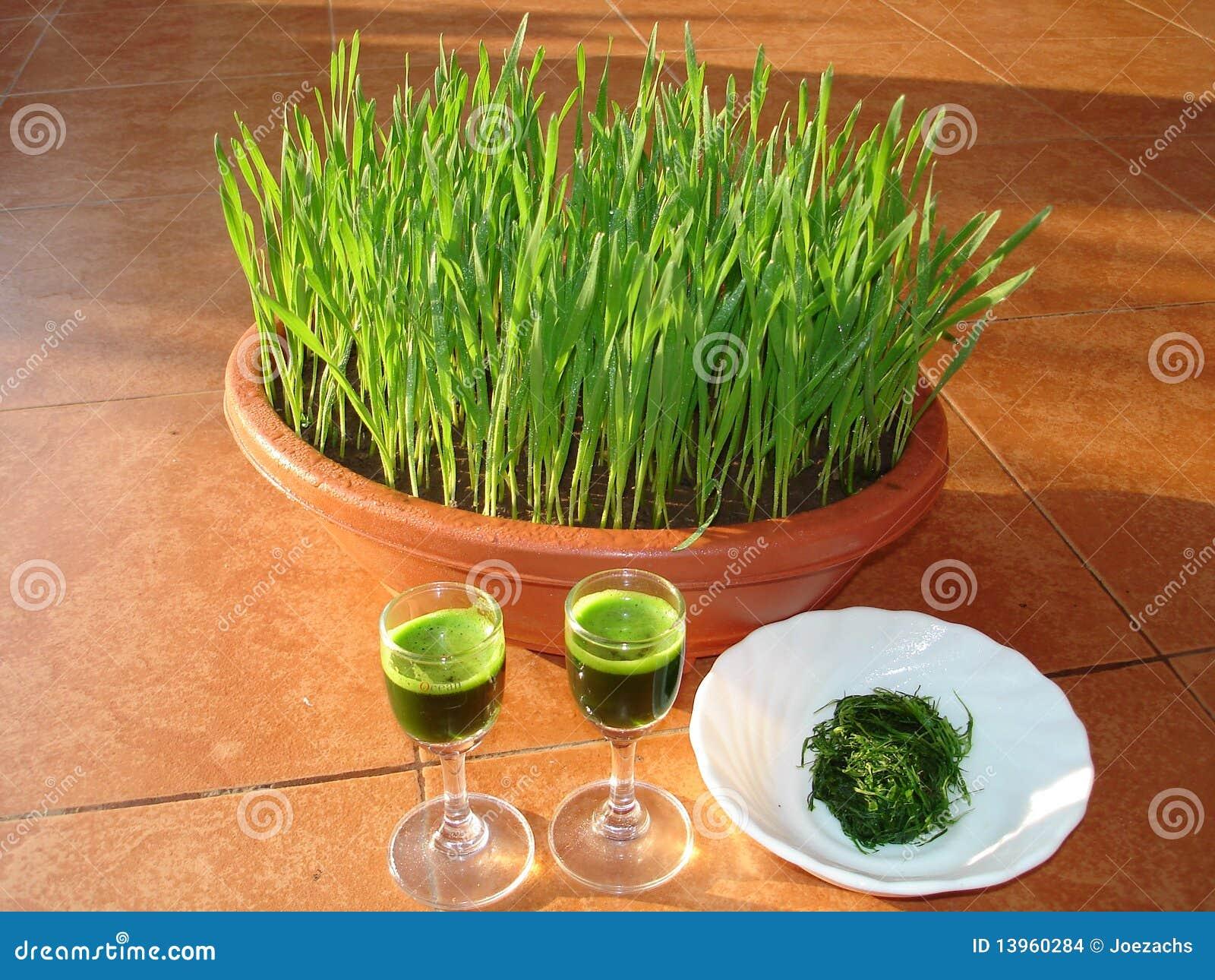 Láminas del trigo