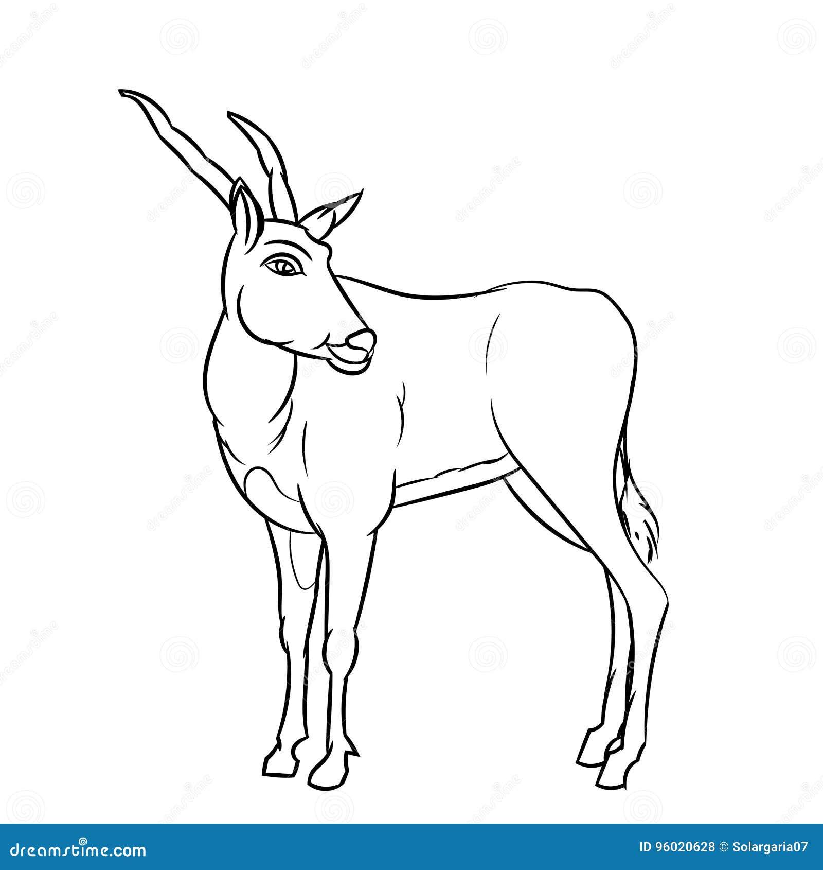 A Lápis Desenho Da Impala Linha Simples Vetor Ilustração
