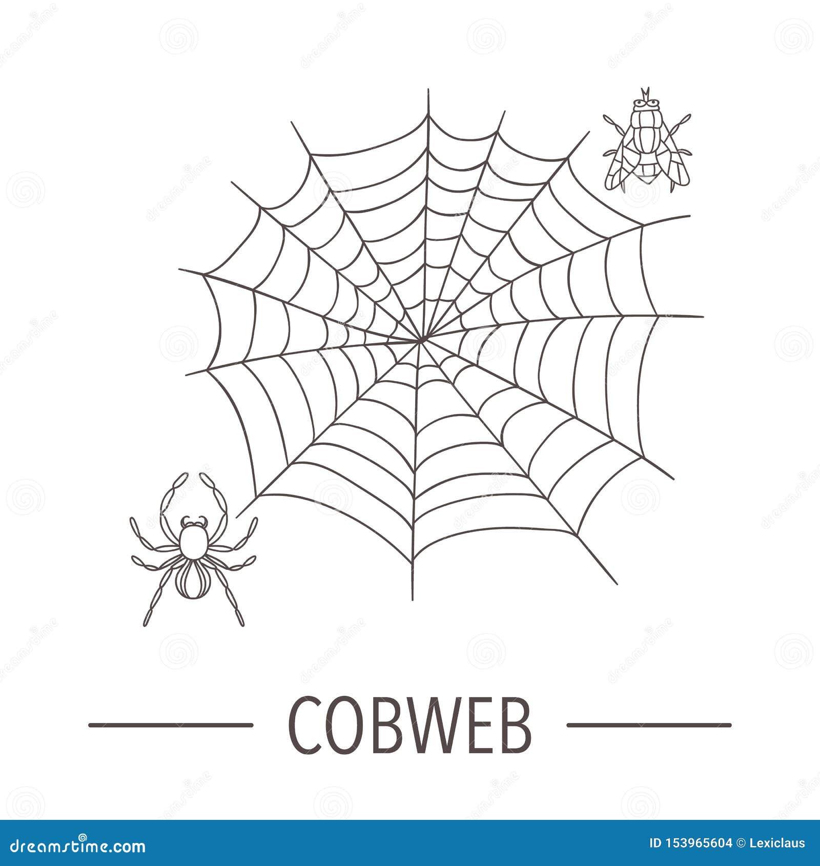 A Lapis Desenho Do Vetor Da Aranha Com Teia De Aranha E Da Mosca