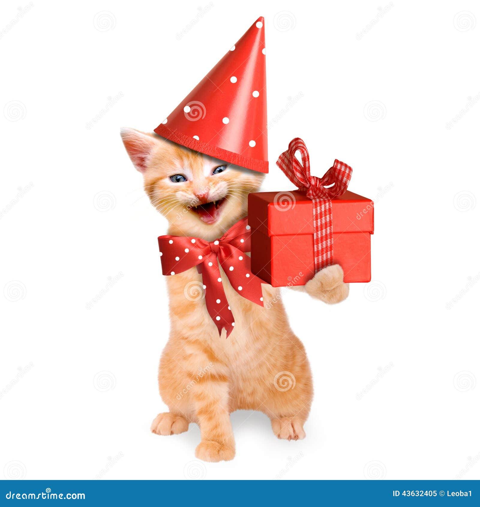 Lachelnde Katze Katzchen Alles Gute Zum Geburtstag Lokalisiert