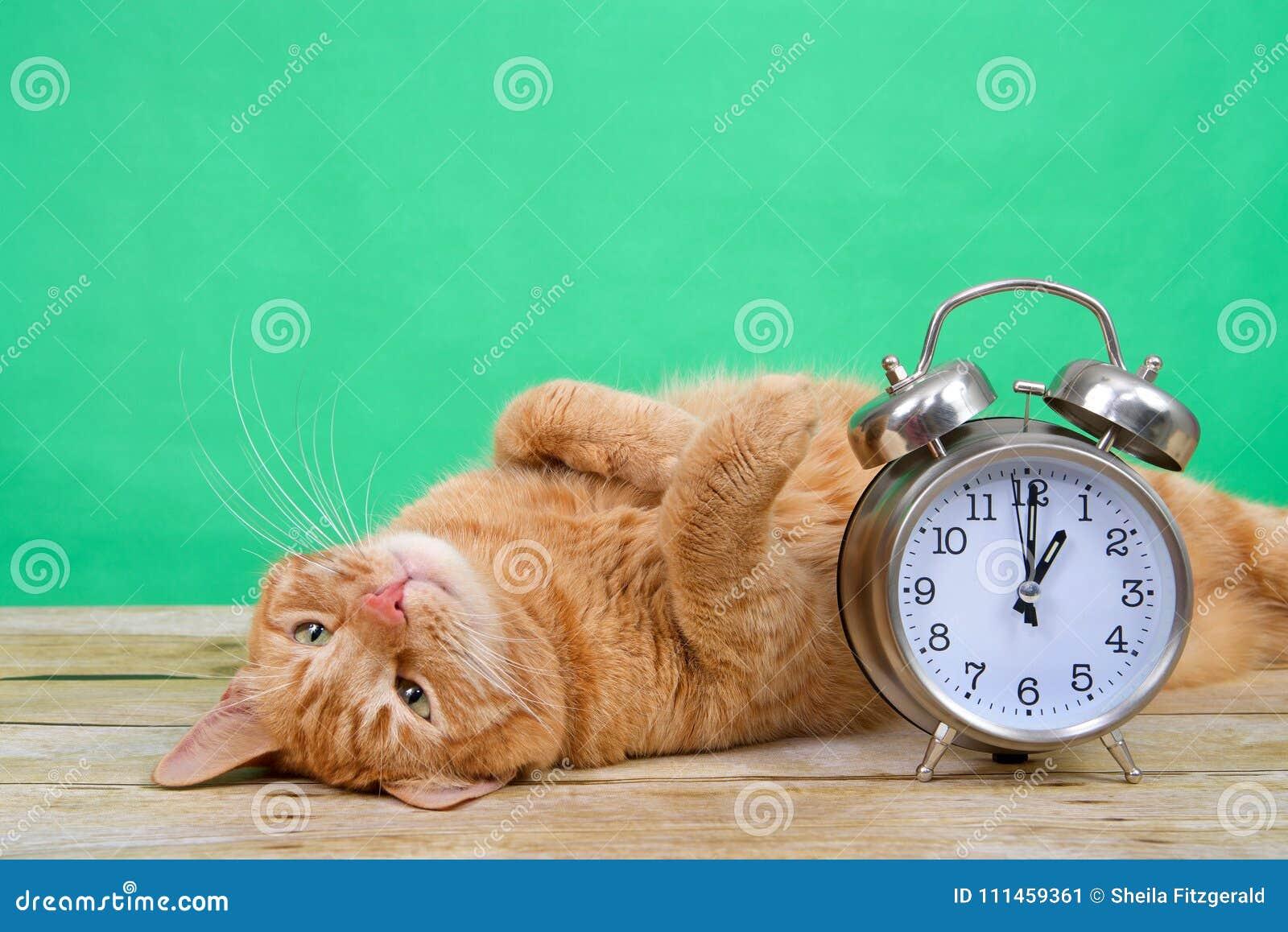 Lägga för katt för strimmig katt för dagsljusbesparingar som är uppochnervänt