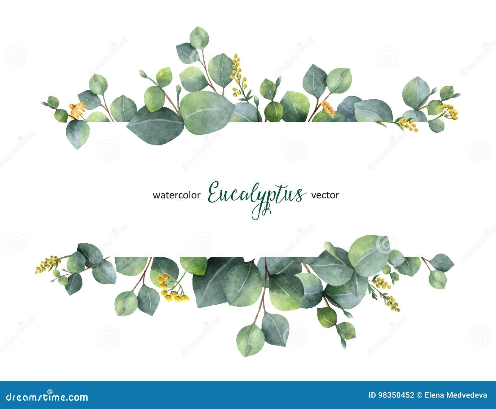 Lämnar det blom- banret för vattenfärgvektorgräsplan med silverdollareukalyptuns och filialer som isoleras på vit bakgrund