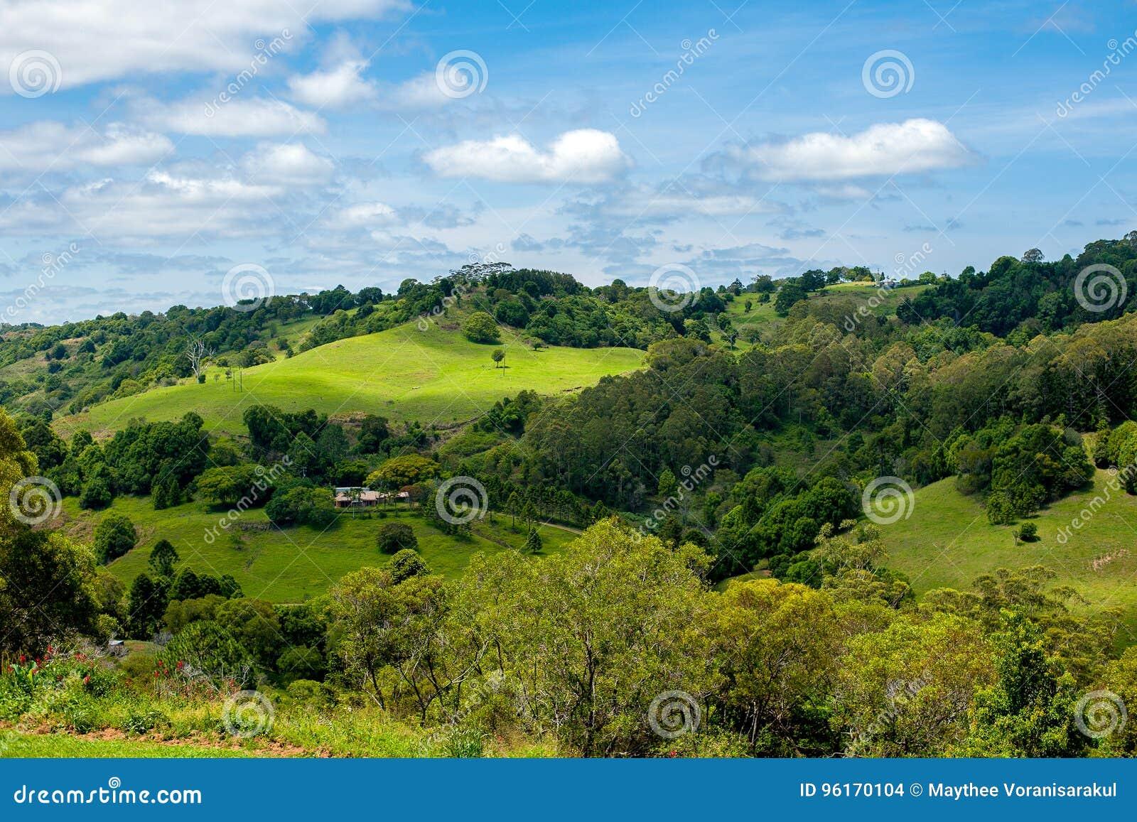 Ländliche Ansicht von Australien-Vieh und -landwirtschaft auf Hügel