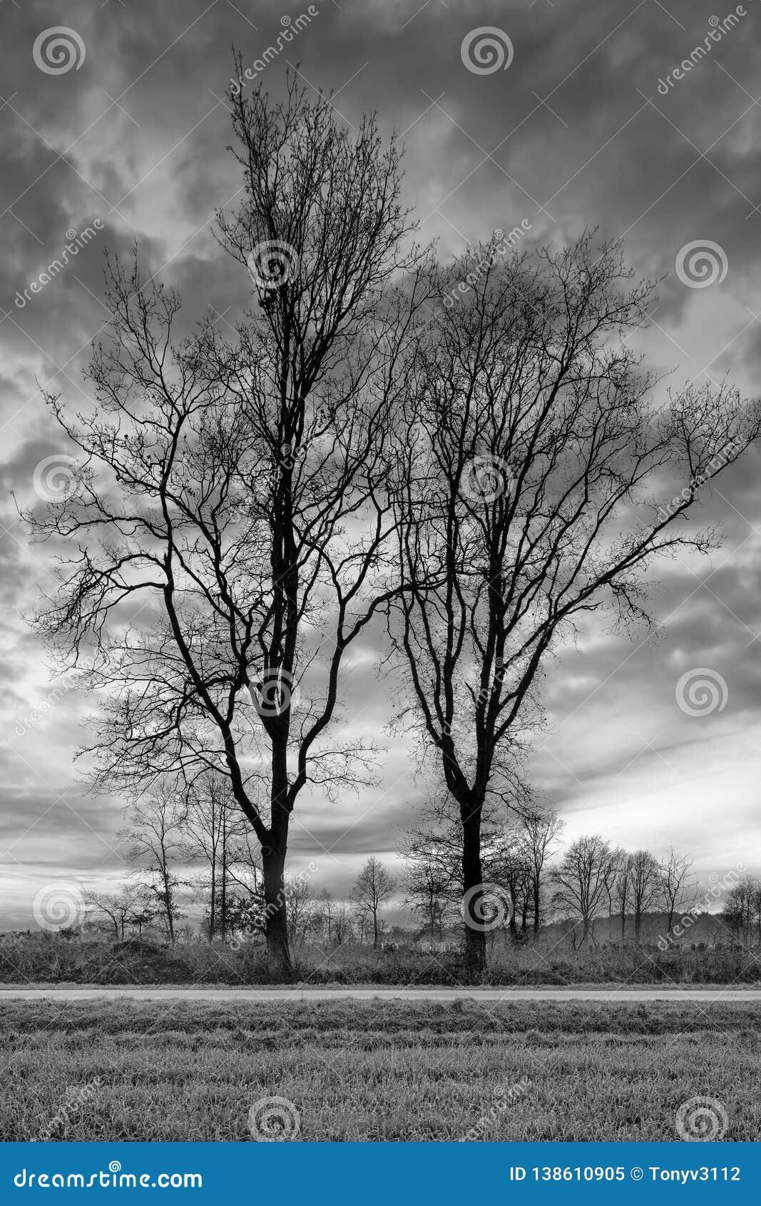 Ländliche Landschaft mit Baumreihe und einem schönen Sonnenuntergang, Weelde, Belgien