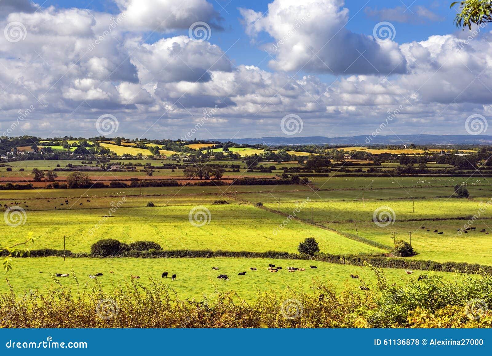Ländliche szenische Ansicht von grünen Feldern, Salisbury, England