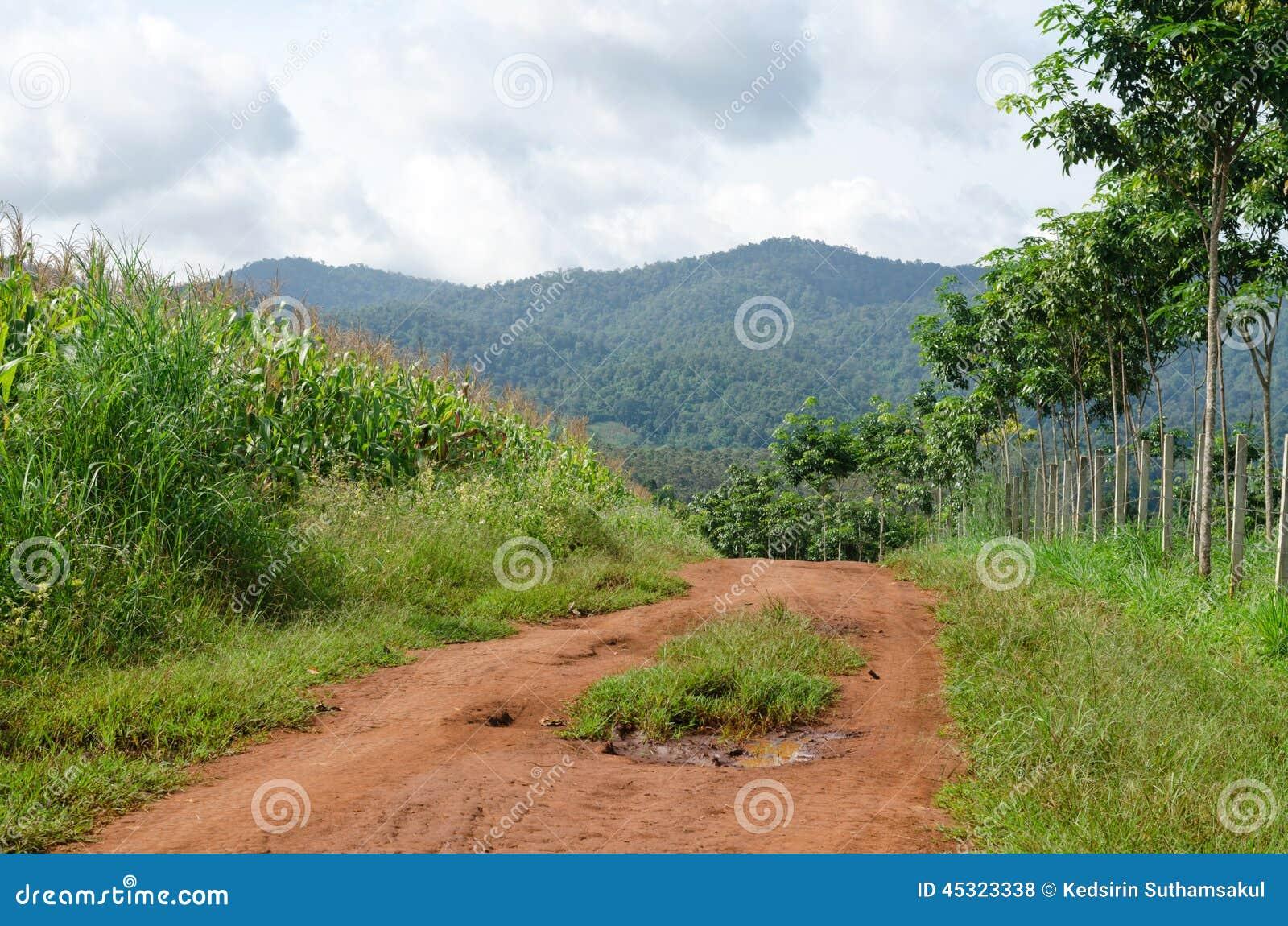 Ländlicher Schotterweg und grüne Wiese auf langem Weg