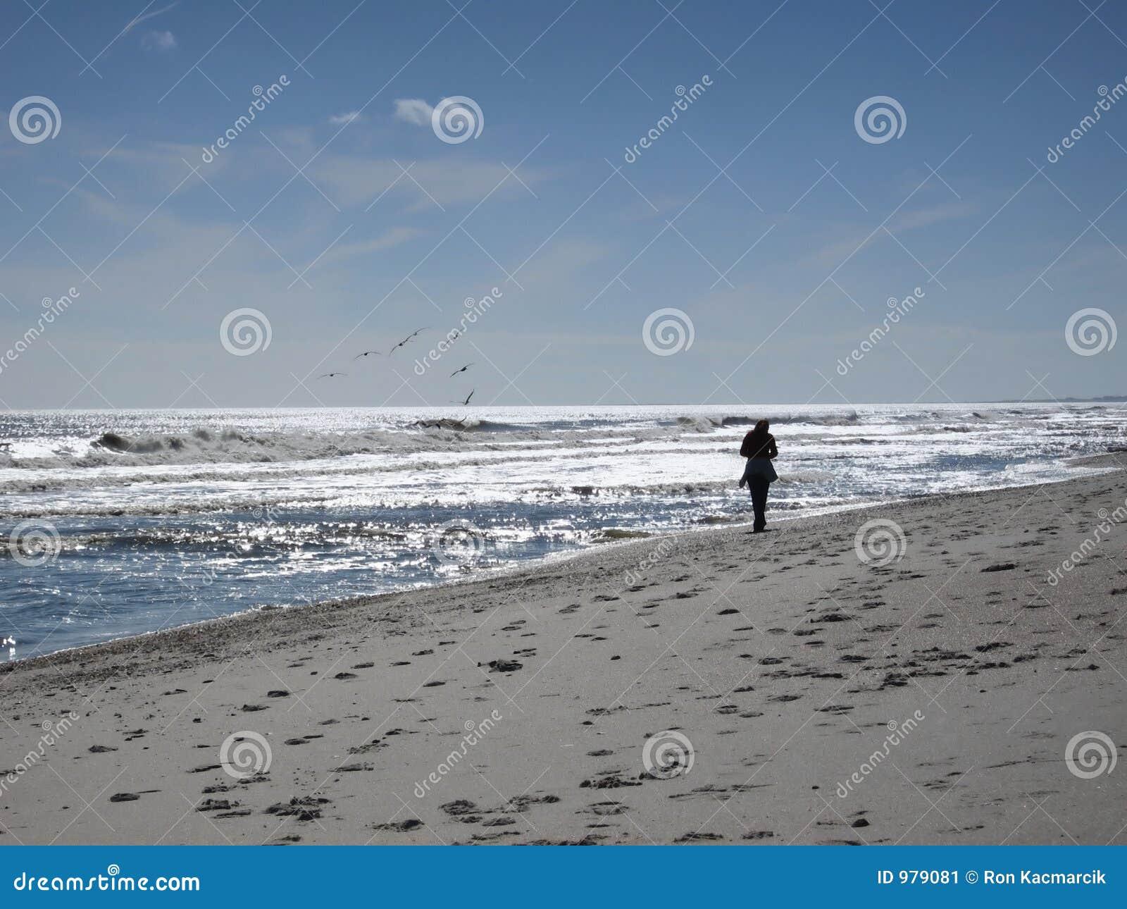 Längs strandflorida att gå