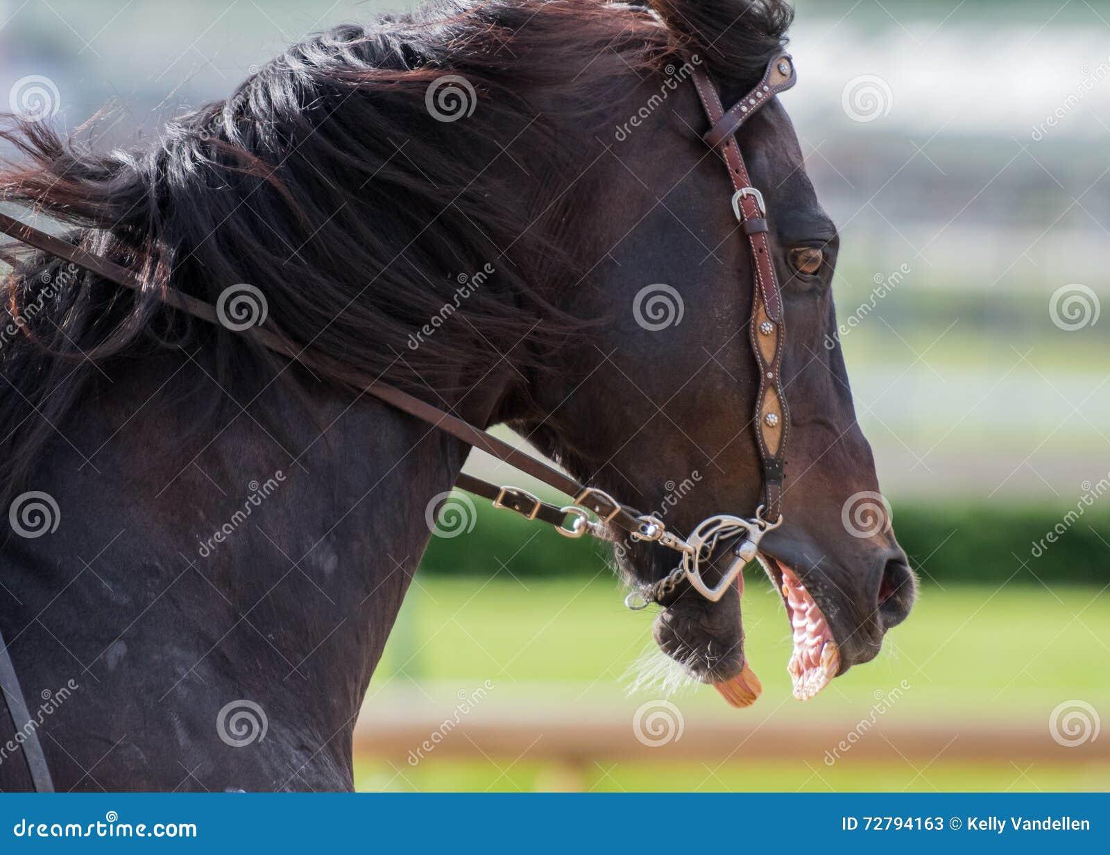 Läskig hästprofil
