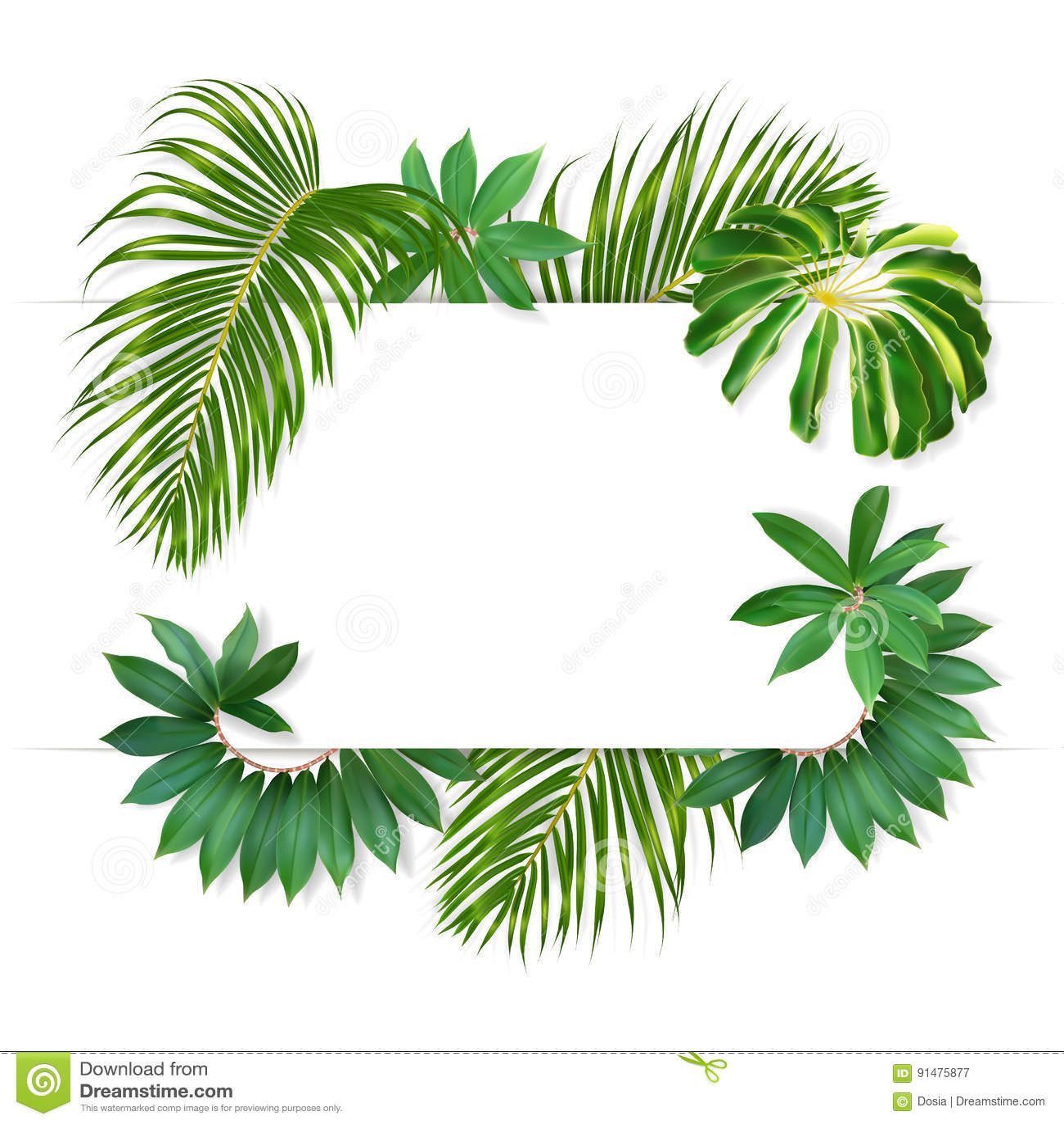 Naturschutzgebiet Gallery wrap Regenwald Bayou Sonnenlicht - muir woods  Zeichen png herunterladen - 408*650 - Kostenlos transparent Wald png  Herunterladen.