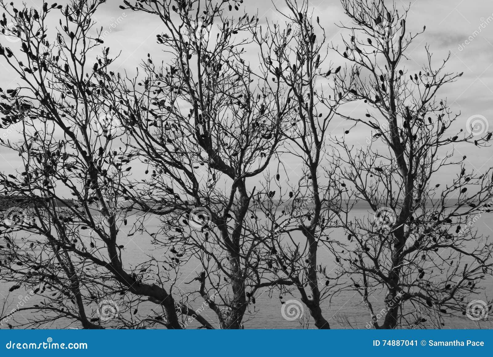 Lätt redigera bilden till treesvektorvintern