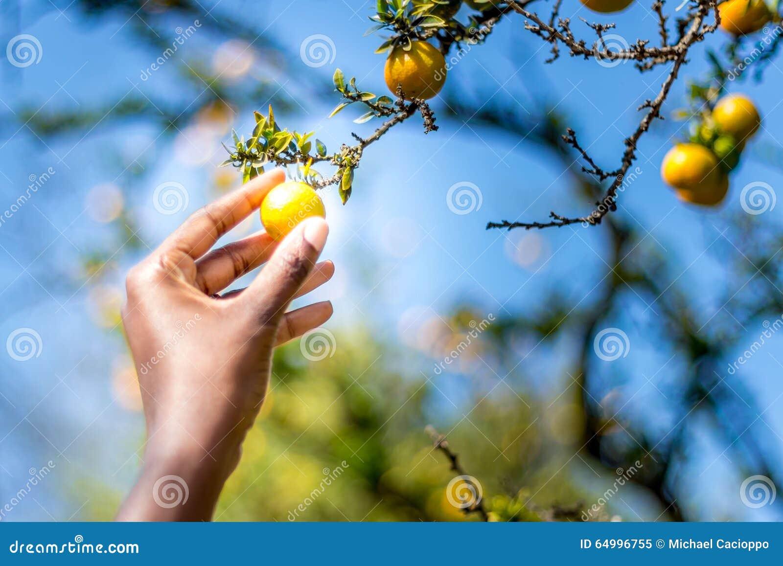 Låg hängande frukt
