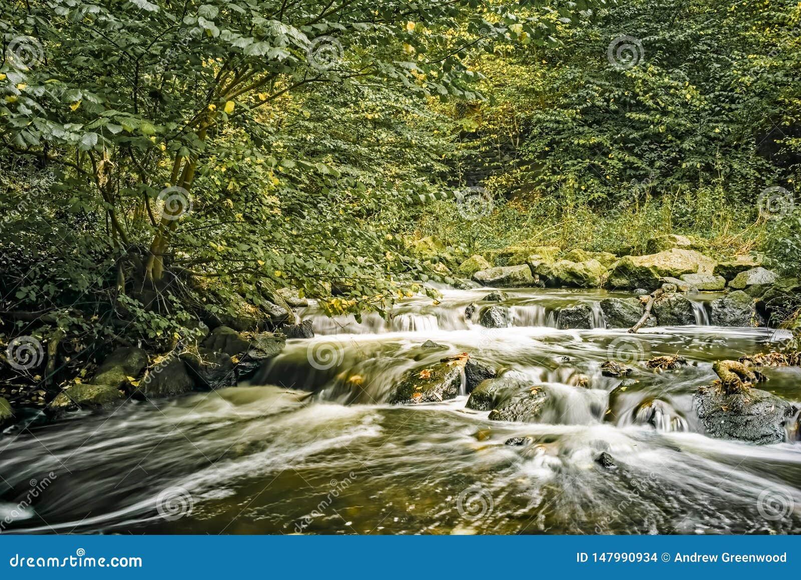 Långsam rinnande flod i vår