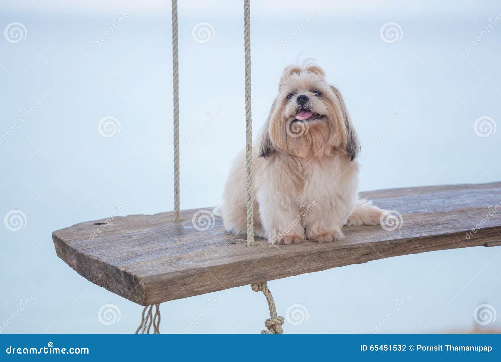 Långt hårhund och hav