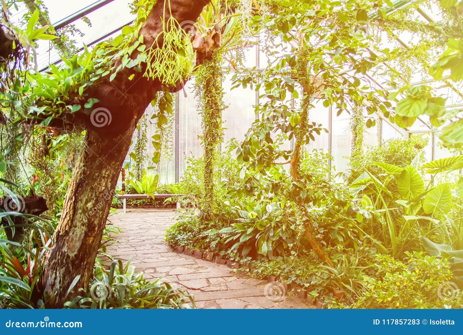 Låter vara tropiskt exotiska växter Grön bakgrund details naturen