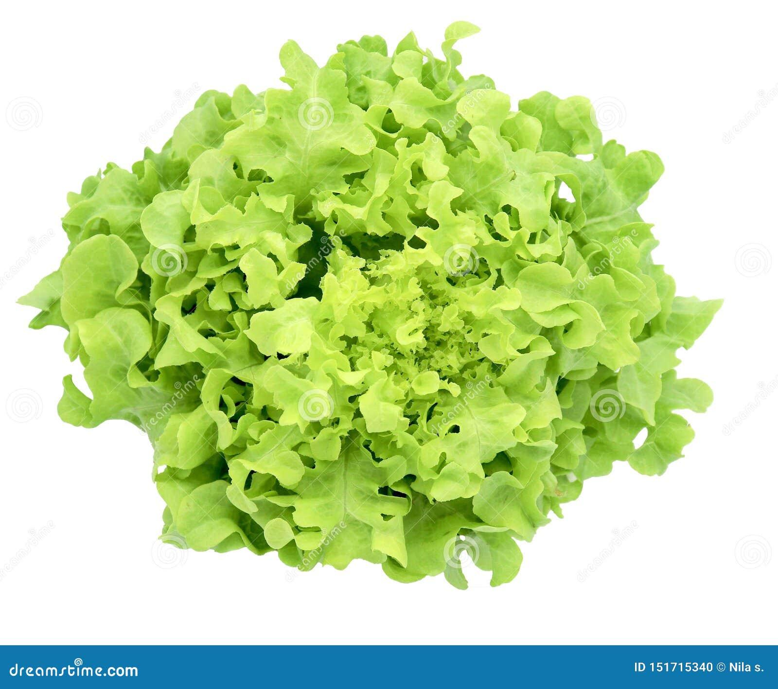 Légume organique pour la salade  Iceberg  verte de frillice de salade d isolement sur le fond blanc