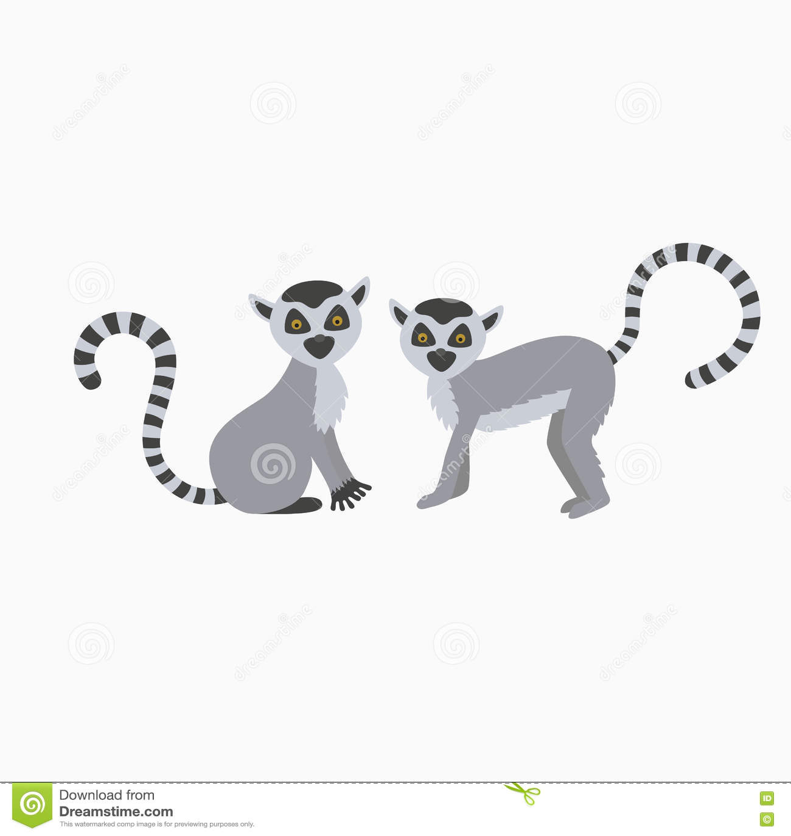 Lémur deux sauvage sur l illustration blanche de fond