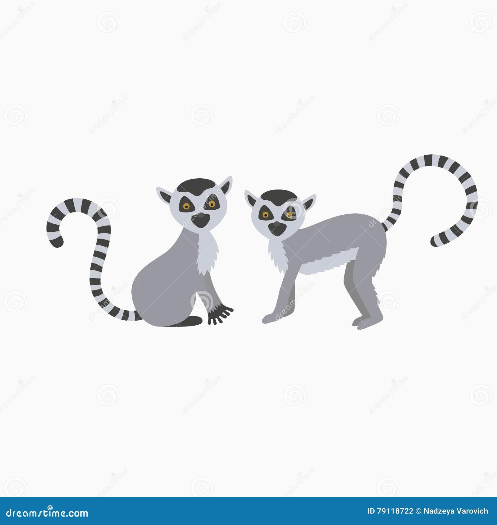Lémur salvaje dos en el ejemplo blanco del fondo