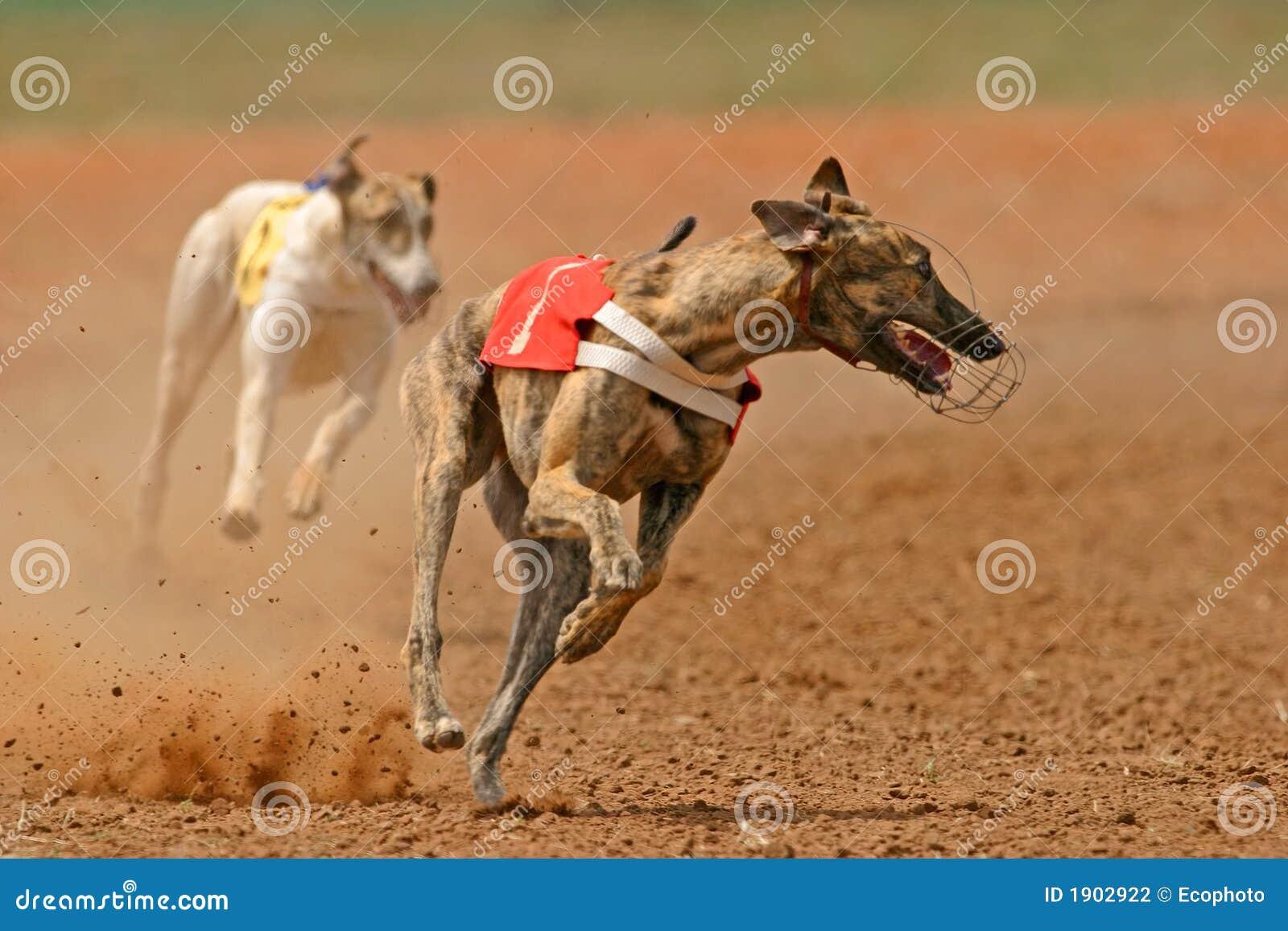 Lévier Sprinting