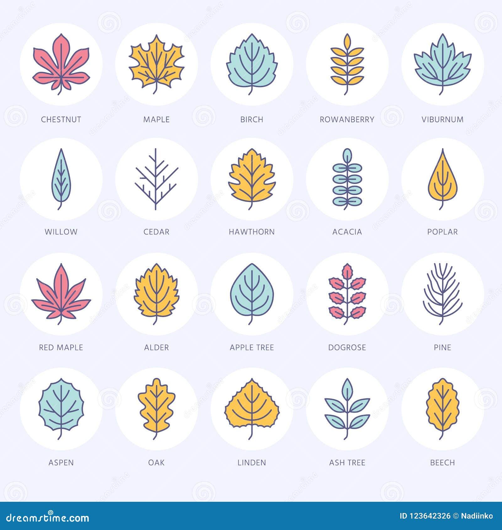 Línea plana iconos de las hojas de otoño La hoja mecanografía, serbal, árbol de abedul, arce, castaña, roble, pino del cedro, til