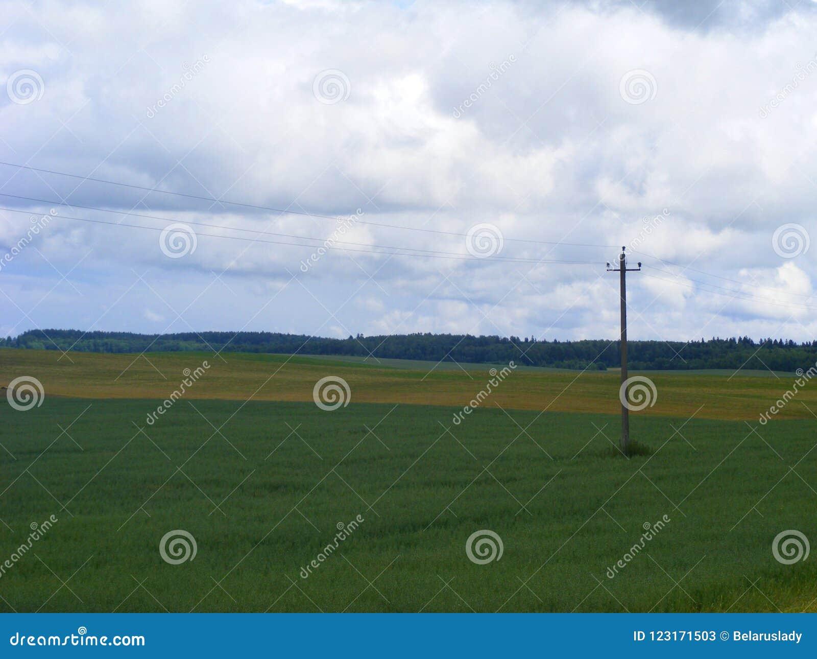 Líneas eléctricas y alambres eléctricos del polo en campo y el cielo azul