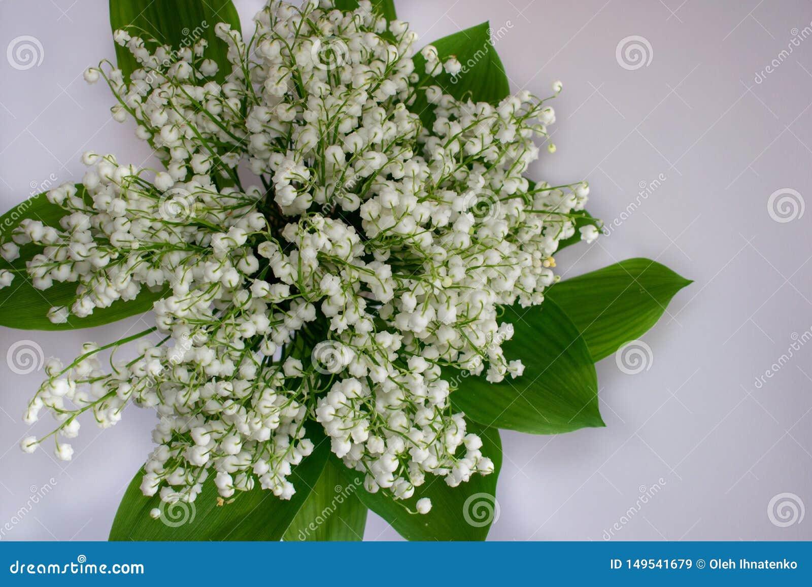 L?rio das flores do vale em um fundo branco