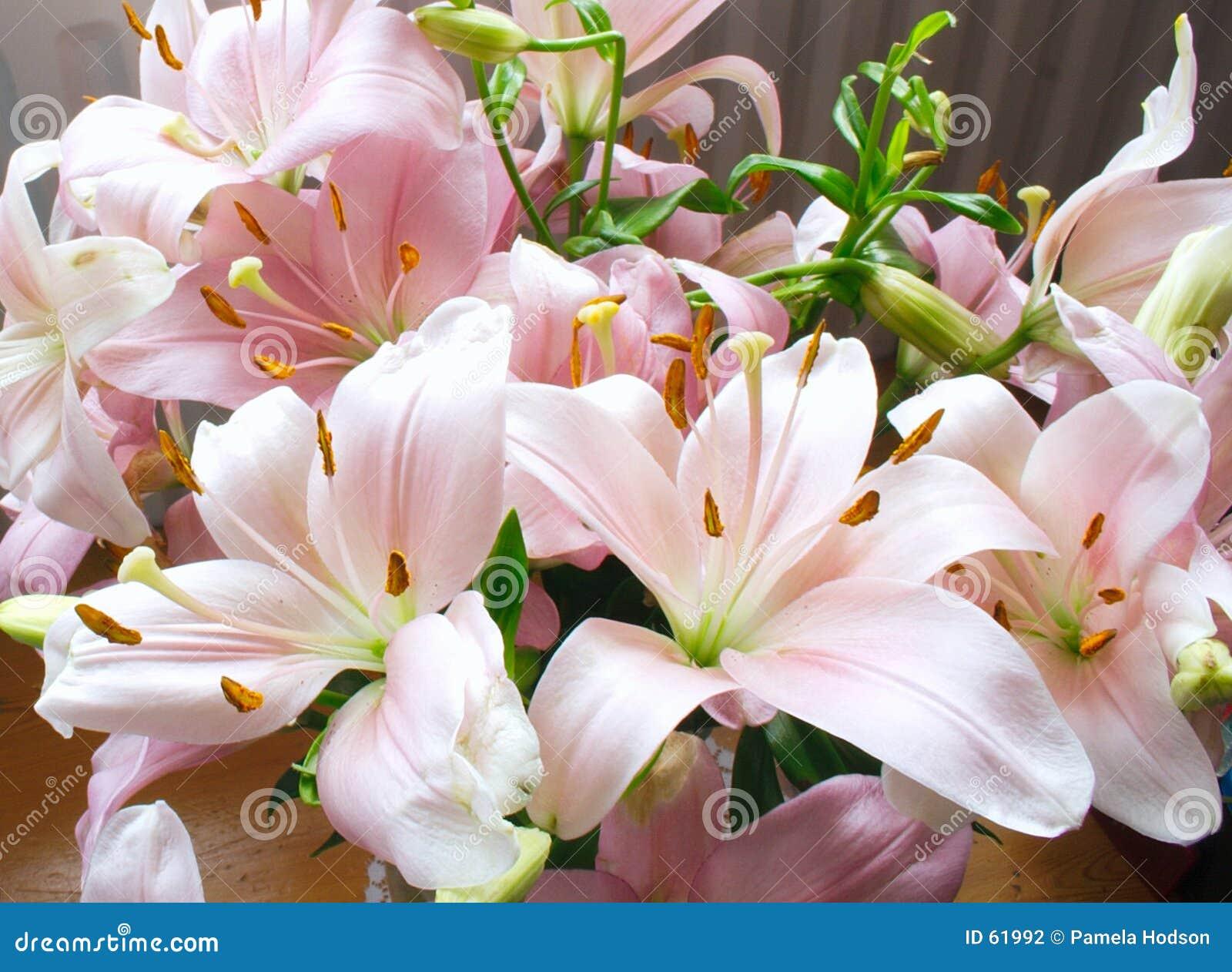 Lírios cor-de-rosa